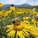 Polinicemos Chile, campaña nacional para proteger a las abejas