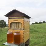 Flow Hive es un revolucionario invento para sacar miel